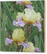 Budding Iris Wood Print