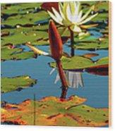 Budding Lilies Wood Print