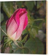 Budding Pink Rose Wood Print