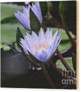 Budding Purple Water Lilies Wood Print