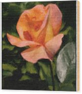 Budding Rose Wood Print