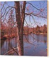 Budding Spring Tree Wood Print