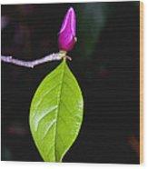 Budding Tulip Tree Bloom Wood Print