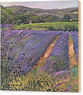 Buddleia And Lavender Field Montclus Wood Print