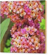 Buddleja Sp. Plant In Flower Wood Print