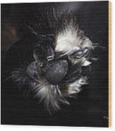 Buddys Fluffy Paw Wood Print