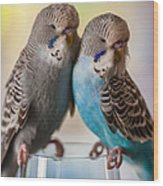 Budgerigars Wood Print