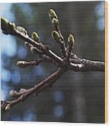 Buds Of Spring Wood Print by Michael Sokalski