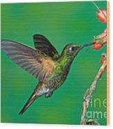 Buff-tailed Coronet Wood Print