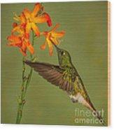 Buff-tailed Coronet Hummingbird No 1 Wood Print