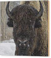 Buffalao In Snow Wood Print