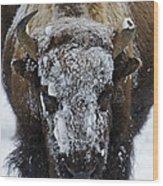 Buffalo #0057 Wood Print