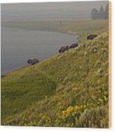 Buffalo   #0237 Wood Print