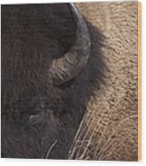 Buffalo   #0921 Wood Print