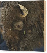 Buffalo   #5601 Wood Print