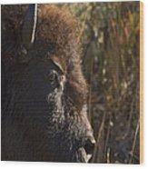 Buffalo   #9242 Wood Print