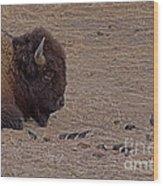 Buffalo And Birds   #2236 Wood Print