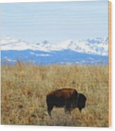 Buffalo And The Rocky Mountains Wood Print