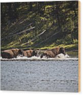 Buffalo Crossing - Yellowstone National Park - Wyoming Wood Print