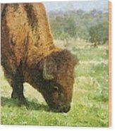 Buffalo Grazing  Wood Print