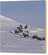 Buffalo Herd In Snow   #6075 Wood Print