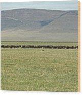 Buffalo Herd Wood Print