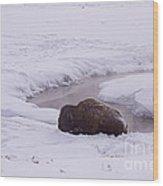 Buffalo In Snow   #6143 Wood Print