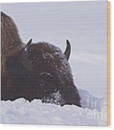 Buffalo In Snow   #6920 Wood Print