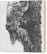 Buffalo In Spring Wood Print by Meldra Driscoll