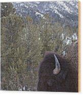 Buffalo In The Mountain   #4169 Wood Print