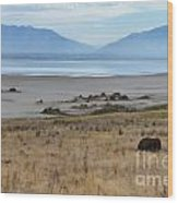 Buffalo Of Antelope Island V Wood Print
