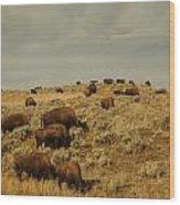Buffalo On The Prairie Wood Print