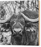 Buffalo Stare In Black And White Wood Print