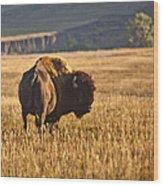 Buffalo Watching Wood Print