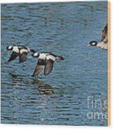 Bufflehead Duck Trio In Flight Wood Print