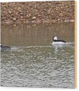Buffleheads 3 Wood Print
