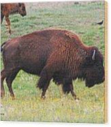 Buffalo Mom Wood Print