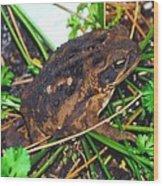 Bufo Toad Wood Print