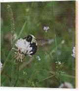 Bug Art 136 Wood Print
