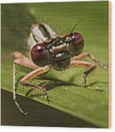 Bug Eyes Wood Print