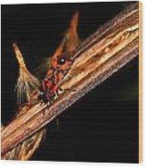 Bug In The Night Wood Print