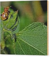 Bug On Leaf Wood Print