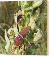 Bug On Stalk Of The Wooly Mullein Wood Print
