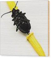 Bug On The Cob Wood Print by Amy Cicconi