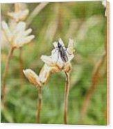 Bug On White Flower Wood Print