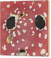 Bugaboo - Amanita Muscaria Wood Print