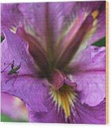 Buggy Iris Wood Print
