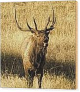 Bugling Bull Elk Wood Print
