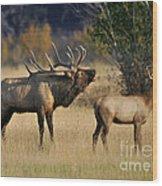 Bugling Elk With Calf Wood Print