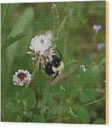 Bugs 140 Wood Print